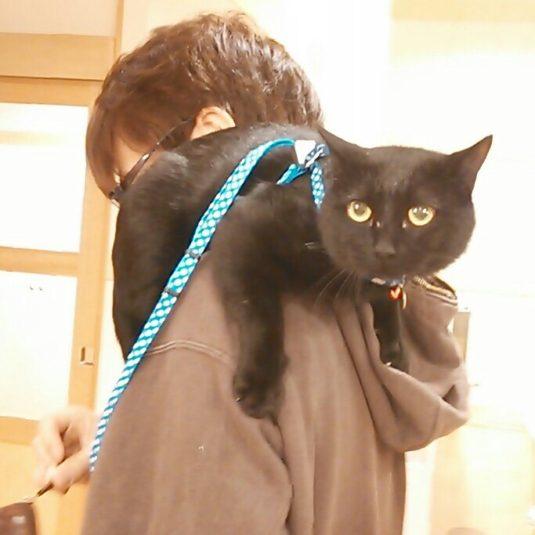 黒猫のココアちゃん