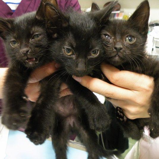 黒猫3兄弟の里親さんが決まりました!
